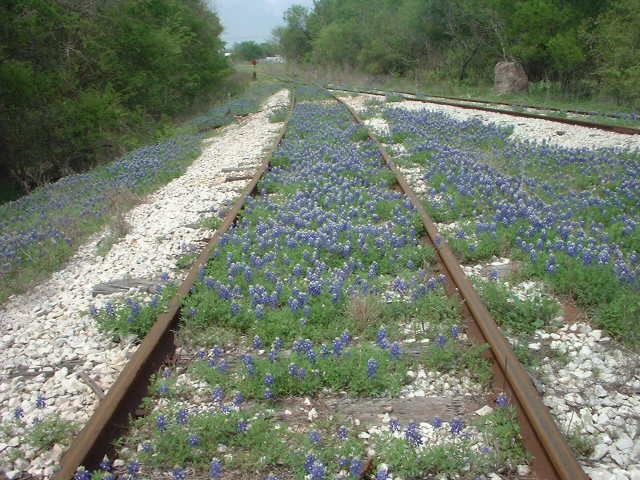 bluebonnettracks2.jpg